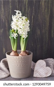 White hyacinth flowers in grey pot, wool scarf and wooden heart on dark textured background
