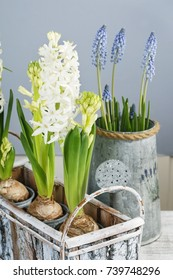 White hyacinths and muscari flowers.
