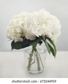 Weiße Hydrangeas in einer Vase