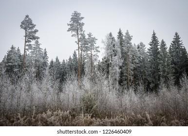 white ice on the frozen trees