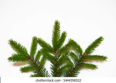 White isolated minimalistic background with  branch of fir-tree. Top view. Place for text. Christmas concept