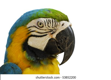 White isolated parrot