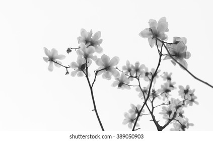 White jade orchid background