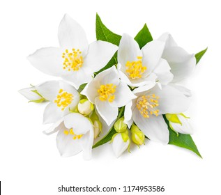white jasmin flowers with leaf isolate on white background