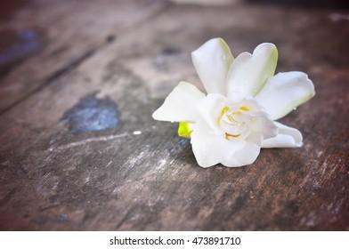White Jasmine flower on wood