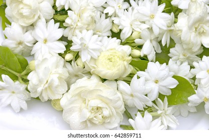White jasmine flowers fresh flowers natural backgrounds.