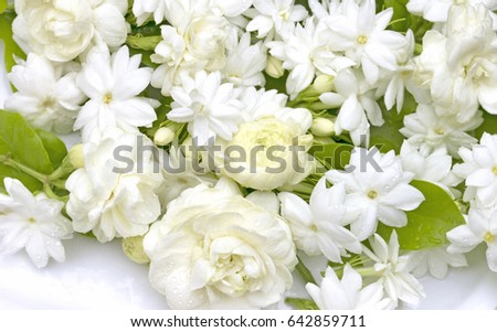 White Jasmine Flowers Fresh Flowers Natural Stock Photo Edit Now