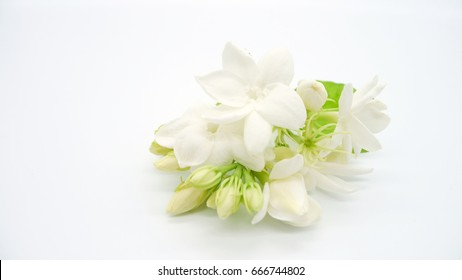 White jasmine flowers isolated on white background. Symbol flower gift for mom in thai mother day celebration.