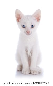 White kitten with blue eyes. Kitten on a white background. Small predator. Small cat.