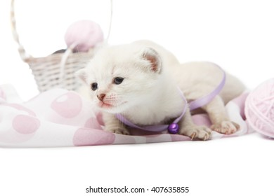 White kitten creeping. Cute kitten in a mauve violet collar with woolen yarn balls in a basket isolated at white background. Adorable brave pet. Small heartwarming kitten. Little cat. High key