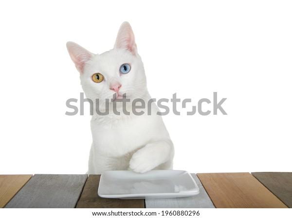 white-kitten-heterochromia-oddeyed-one-6