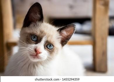 White kitten looking in front