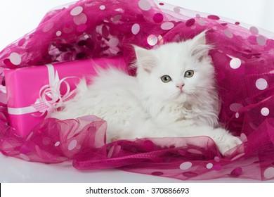 White kitten on pink