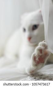White kitten with paw focus