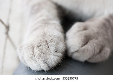 White kitten paws closeup on top of house sofa
