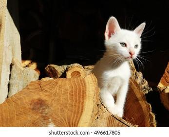 white kitten playing on firewood