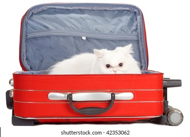 white kitten in the red suitcase