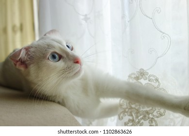 White kitten rest in front of the window