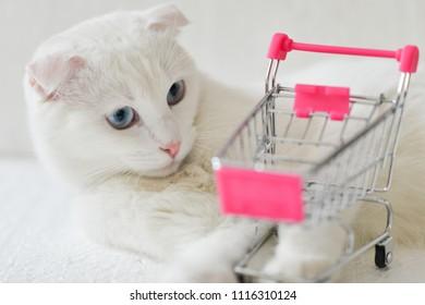 White kitten and shopping cart