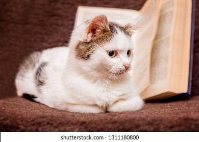 A white kitten sits at an open book