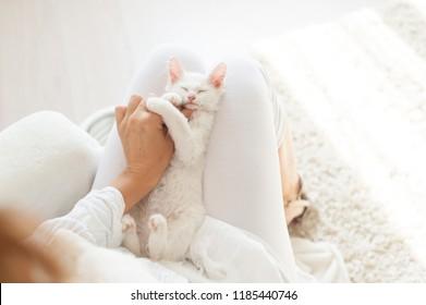 White kittens in hands