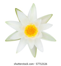white lake lilly isolated on white