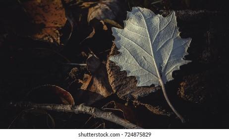White leaf on wooden stump