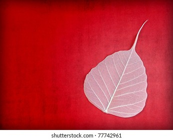 White Leaf Skeleton on Red Grunge Background with Copy Space