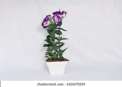 White and lilac lisianthus flower on the table