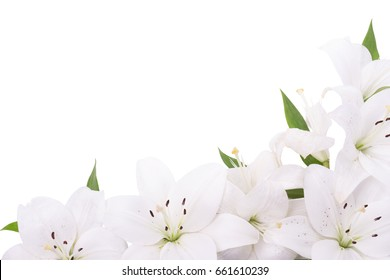 White lilies, Flowers at the bottom of the frame, Corner scene, White background