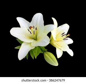 White lilies isolated on a black background