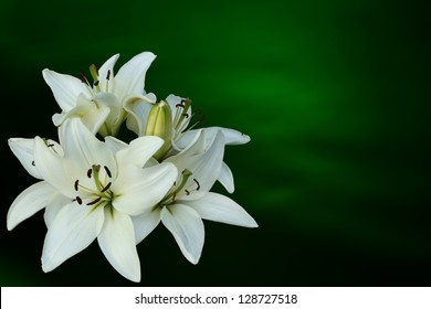 White lilies on green background, Easter theme