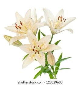 White lily bouquet. Isolated on white background