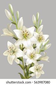 White lily bouquet. Isolated on gray background.