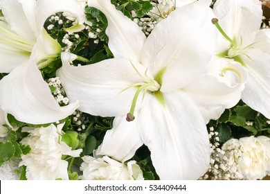 White Lily flower close up