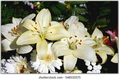 White  lily flowers in the form of a bouquet.