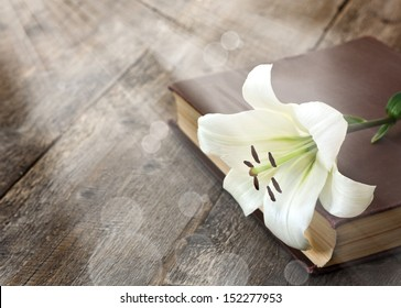 White Lily illuminated by the sun on a wooden background