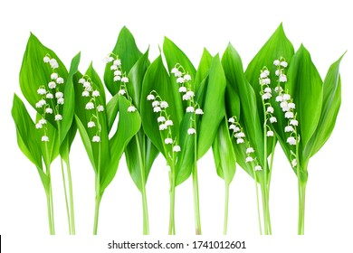 White lily of the valley flowers & green leaves border on white background isolated closeup, beautiful may lily flower frame, convallaria majalis, summer wallpaper, spring nature, floral greeting card