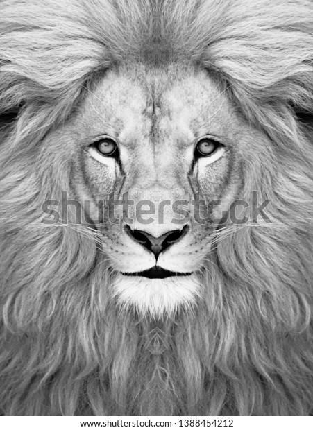 White Lion Face Wallpaper Lion Head Stock Photo Edit Now 1388454212