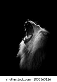 White Lion Scar