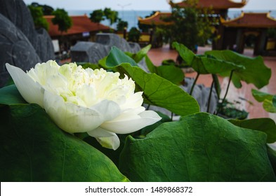 White lotus in buddhist temple on a seashore on Phu Quoc island, Vietnam. View on pagoda