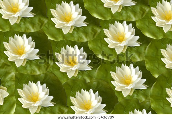 white lotus flower background pattern close up