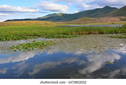 White lotus flower with green leaves floating on lake. Lotus lake in mountains Armenia. Lotus blossoms or water lily flowers blooming on pond. Beautiful reflection of lotos buds. White Nymphaea