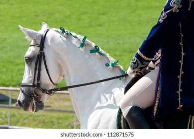White Lusitano Horse at Barockpferdetag competition, in Aeurgental, Switzerland