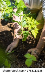 A white man plants trees in a forest, protecting seedlings and protecting the environment, hands in the soil