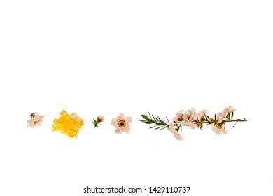 white manuka tree flowers with manuka honey on white background
