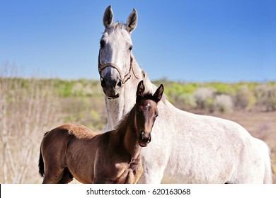 White mare and her foal