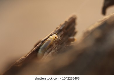 White Mayfly and termites on the wood.Termites eat wood and destroy houses, wood parts and destroy wood products.