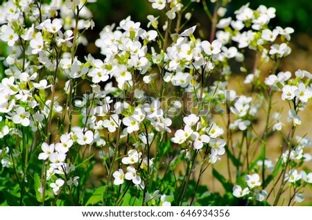 White meadow flowers green mood stock photo edit now 646934356 white meadow flowers with green mood mightylinksfo