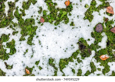 White melting snow lies on the green grass next to the withered brown fallen leaves. Abstract phot from the fallen first snow on the ground.